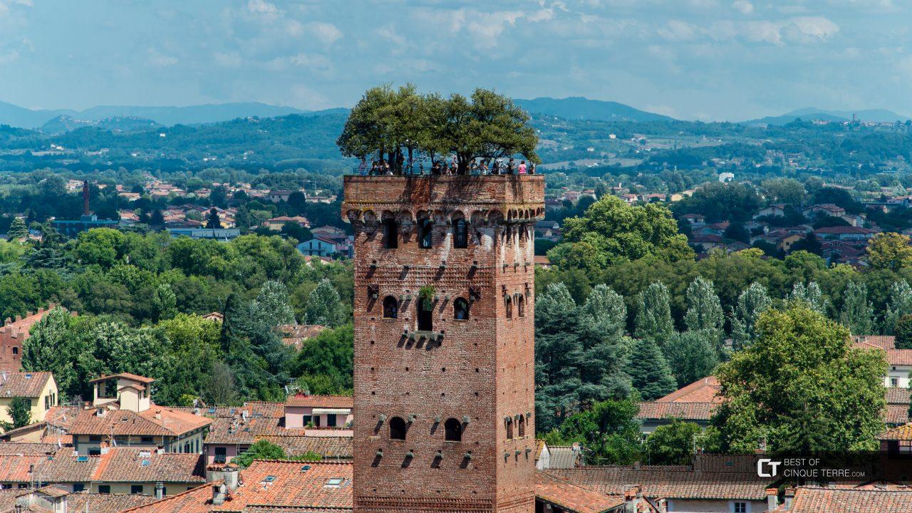 lucca-guinigi-tower